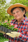 Senior woman - gardening — Stock Photo