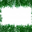 Stock Photo: Detail of coniferous - frame