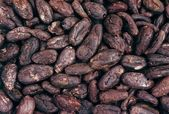 Cocoa beans - background — ストック写真