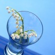 Lily of the valley over blue background — Stock Photo #2459234