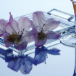 Stock Photo: Rhododendron - decoration