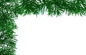Detail of coniferous - frame — Stock Photo