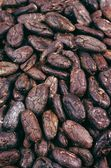 Cocoa beans - background — Stock Photo