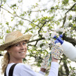 Young woman spraying apple tree - Stock Photo