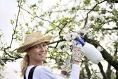 Young woman spraying apple tree — Stock Photo