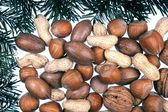 Detail of coniferous and nuts - frame — Stock Photo