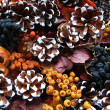 Christmas - dried berry and cones — Stockfoto