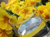 Copo de água e prímula - detalhe — Fotografia Stock