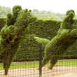 Two horsemans jumping fence — Stock Photo #2503134