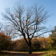 Oak in park — Stock Photo #2580602