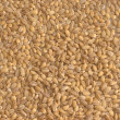 Peeled barley (groats) background — Stock Photo