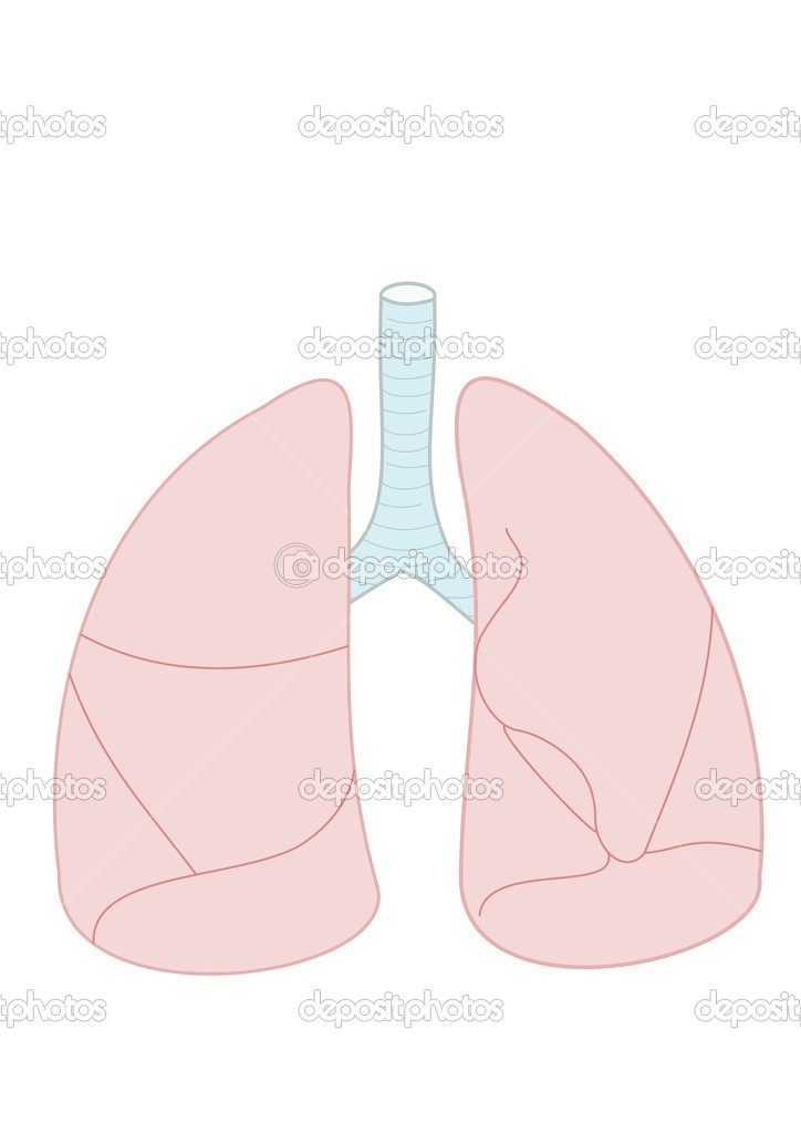 Illustration of lungs — Stock Photo #2309380