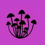 Magic mushrooms — Stock Photo #2310242