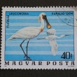 Hungarian post stamp depicting spoonbill — Stock Photo
