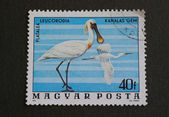Hungarian post stamp depicting spoonbill — Foto de Stock