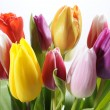 Bunch of tulips flowers — Stock Photo #2373757