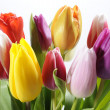 Bunch of tulips flowers - Stock Photo