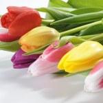 Bunch of tulips flowers — Stock Photo