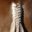 Braid at horse — Stock Photo