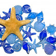 Blue Sea Shells and a Star Fish — Stock Photo #2223802