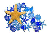 Blue Sea Shells and a Star Fish — Stock Photo