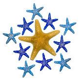 Star Fish Pattern — Stock Photo