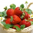 Strawberry — Foto de stock #2256772
