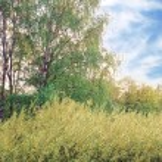 Garden of Spring Season — Stock Photo