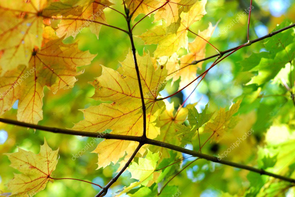 一串秋天树叶– 图库图片