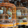 Birdcage - Foto Stock