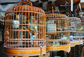 Many birdcage on bird park in Hong Kong — Stock Photo