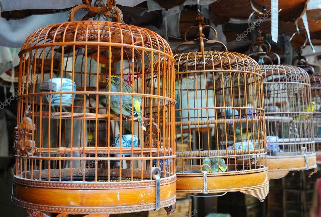 Many birdcage on bird park in Hong Kong — Stock Photo #2236305