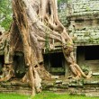 Ta Prohm temple, Cambodia — Stock Photo #2250204