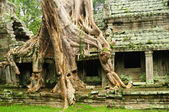 Ta Prohm temple, Cambodia — Stock Photo