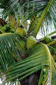 Ver en palmera — Foto de Stock