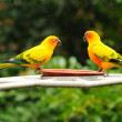 Stock Photo: Colourful parrots