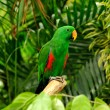 Beautiful parrot - Stock Photo