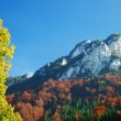 Autumn summer hill Landscape — Stock Photo