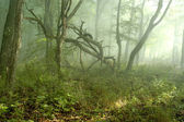 Fog in forest — Stock Photo