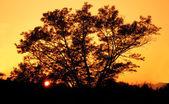 Beautiful sunset — Stock Photo