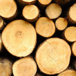 Stock Photo: Wood stores