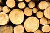 Wood stores — Stock Photo