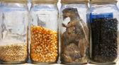 Peacled chipmunks — Stock Photo