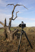 Shooting Sonoran desert — Stock Photo