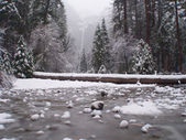 Yosemite park under snow — Stock Photo