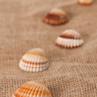 Shell laing on jute — Stock Photo #2276372