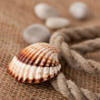 Shell laing on jute — Stock Photo #2276418