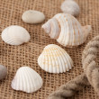 Shell laing on jute — Stock Photo