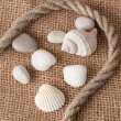 Shell laing on jute — Stock Photo