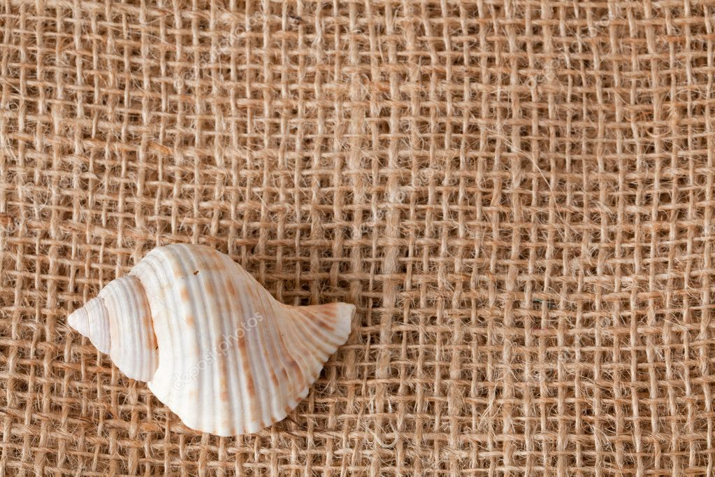 Background with shell laying on jute — Stock Photo #2276264